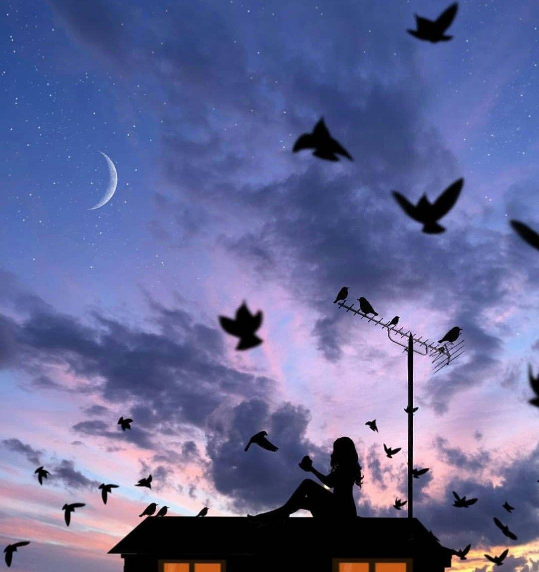 ليتنا مثل الطيور كلما ضاقت بنا الأرض تركناها ورحلنا إلى عالم آخر