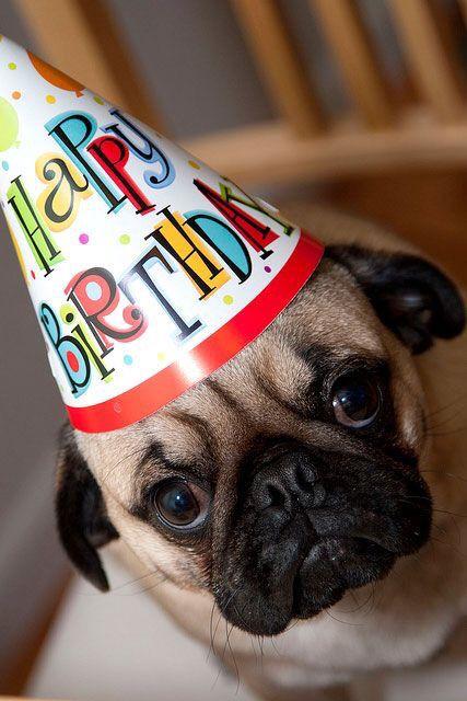 Открытка с мопсом, днем рождения