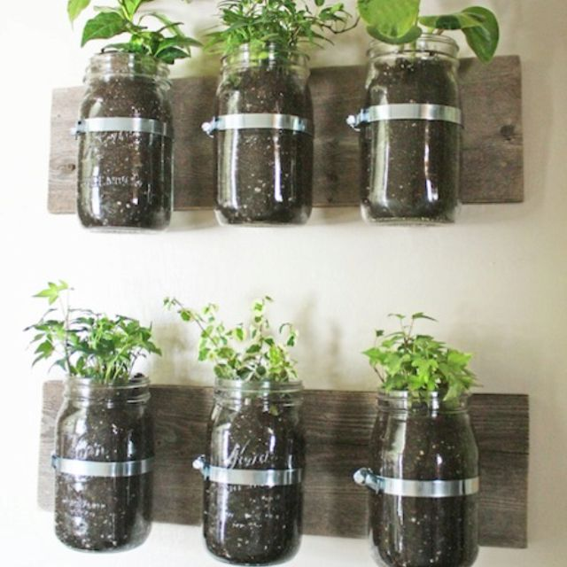 Ball jar herb garden (could add short straws to airate soil)