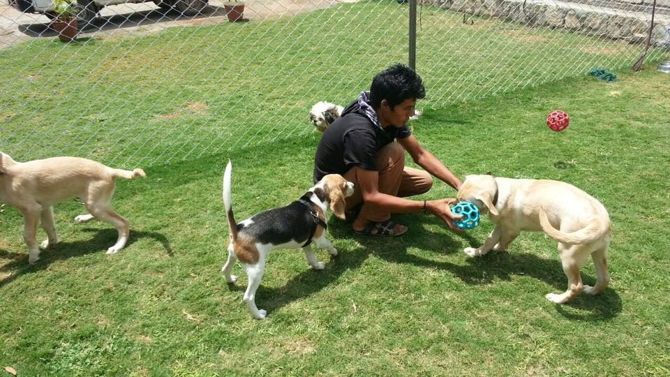 Our canine guests are having fun at our Pet Resort in
