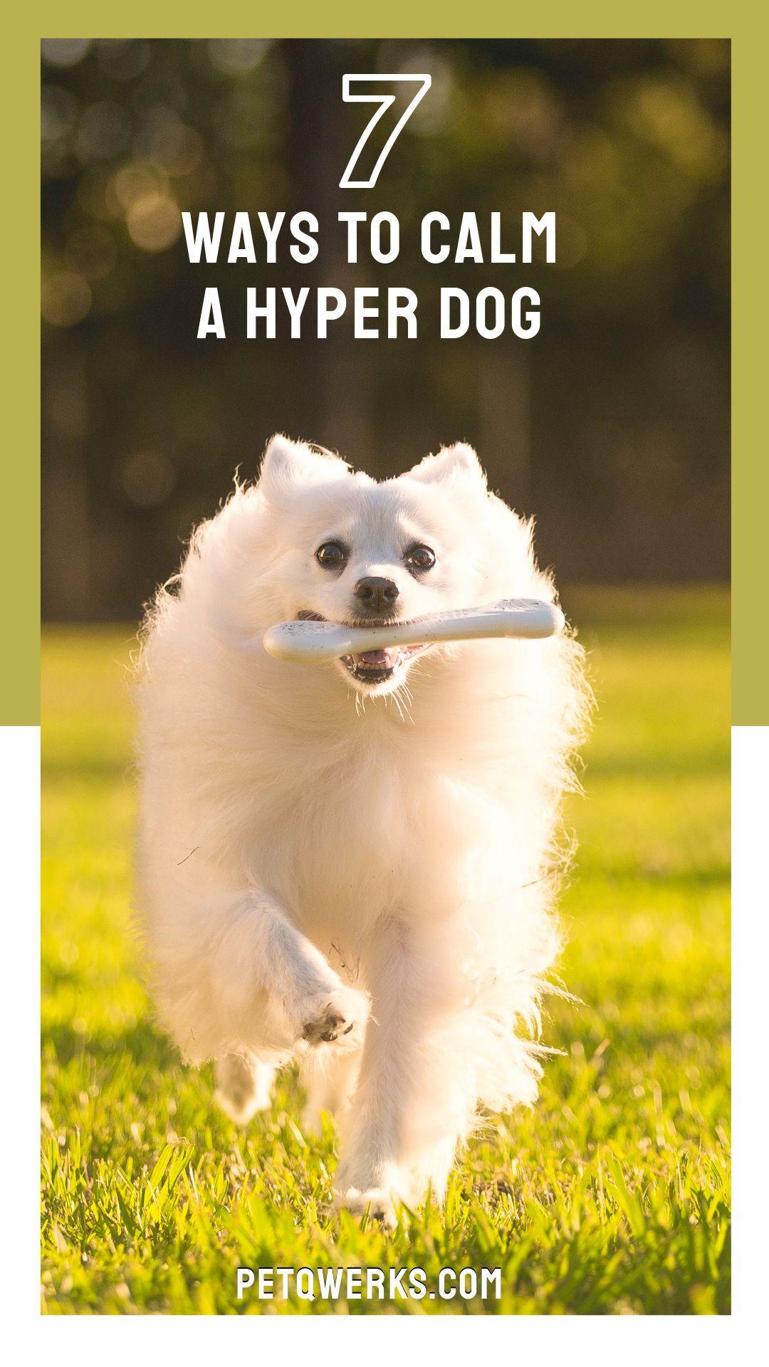 How to calm a hyper dog pet qwerks toys hyper dog
