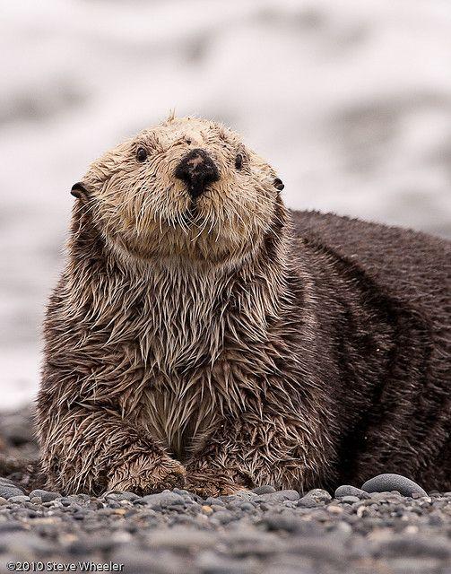Sea Otter Animals Sea Otter Animals Beautiful