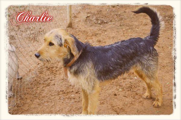Charlie Hogar Refugio La Candela Perros En Adopcion Perros