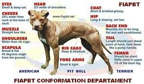 Image Result For American Pitbull Terrier Conformation American