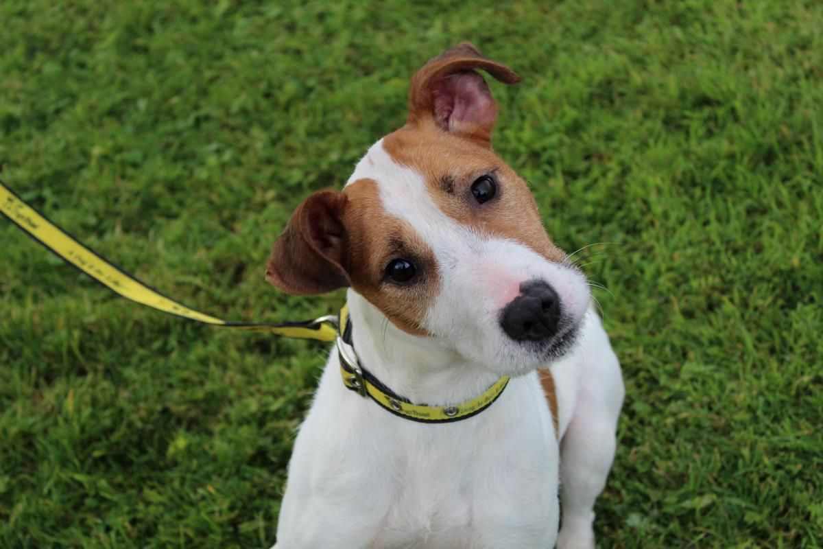 Looking at ImeldaMo dogstrust rehomeadog Rehoming