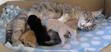 Cute Alert Watch This Livestream Of A Mom Cat Nursing Her Kittens Cat Mom Kittens Cats