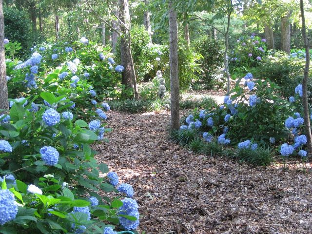Identifying Different Types of Hydrangeas (Living With Thanksgiving ...