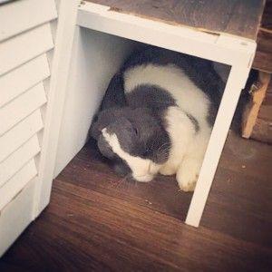 selbstgebauter kaninchenauslauf f r die wohnung kaninchenparadies pinterest bunny animal. Black Bedroom Furniture Sets. Home Design Ideas