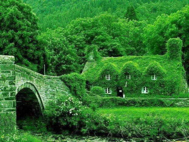 Small ish. Wales fairytale cottage.  Covered completely by type of ivy.  Amazing.