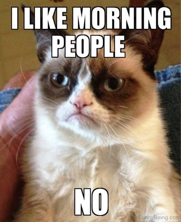 80 Good Morning Memes To Kickstart Your Day Sayingimages Com Grumpy Cat Humor Grumpy Cat Quotes Grumpy Cat Meme