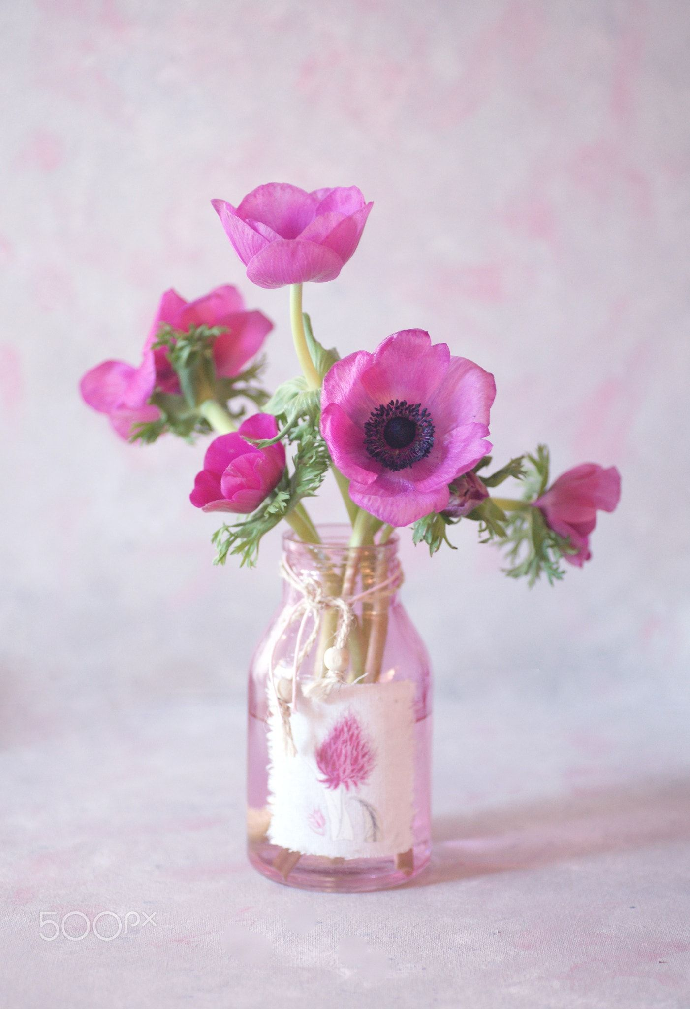 Sony Dsc Pink Anemones In A Glass Vase Flower Creation Flowers Photography Glass Vase