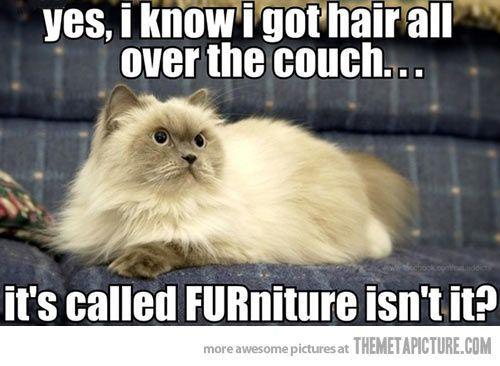 Hairy Furniture Animal Jokes Funny Animals Cat Jokes