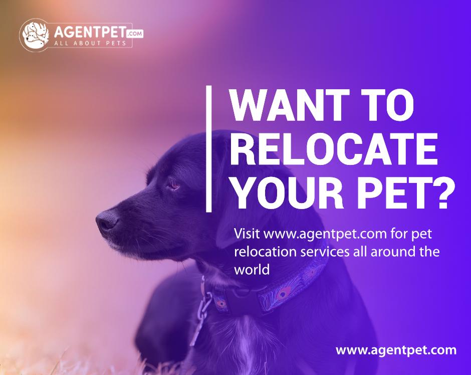 Relocate Pet Relocation Pets For Sale Pets Online