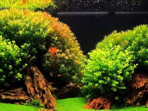 pin by robert holzler on aquascaping fish tanks pinterest. Black Bedroom Furniture Sets. Home Design Ideas
