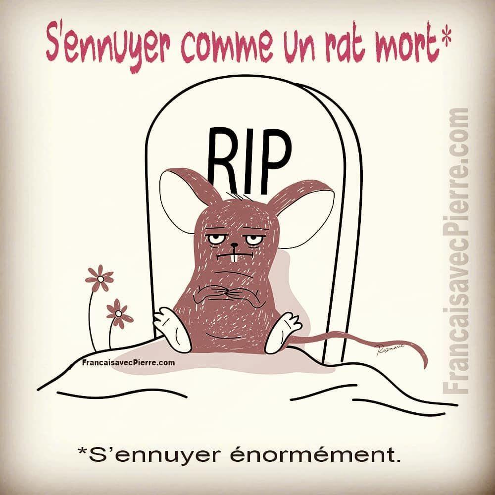 Expression Francaise S Ennuyer Comme Un Rat Mort S Ennuyer Enormement Exemple Ca Fa Expressions Francaises Expressions Idiomatiques Apprendre L Anglais
