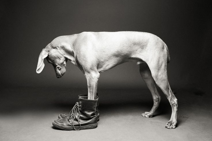 Shoe Dogs by McCartneys Dog Photography - Pretty Fluffy