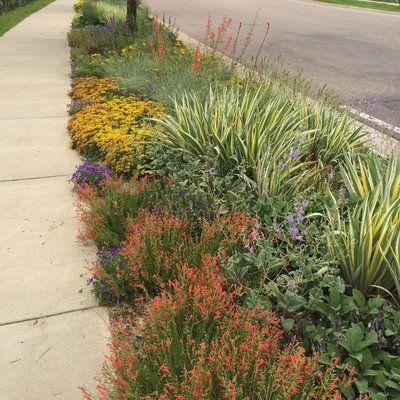 Best Sidewalk Garden Ideas Sidewalk Landscaping Low Maintenance Garden Xeriscape