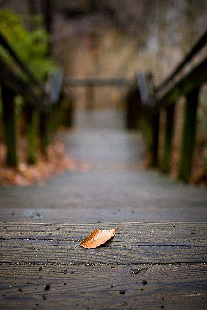 Leaf on Stairs | Flickr - Photo Sharing!