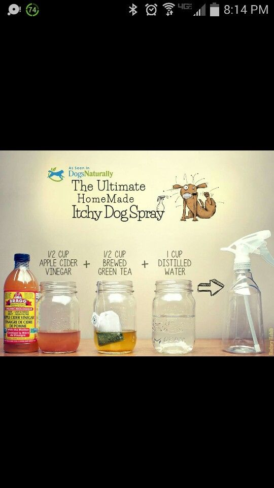 The Ultimate Homemade Itchy Dog Spray Itchy Dog Spray Itchy Dog
