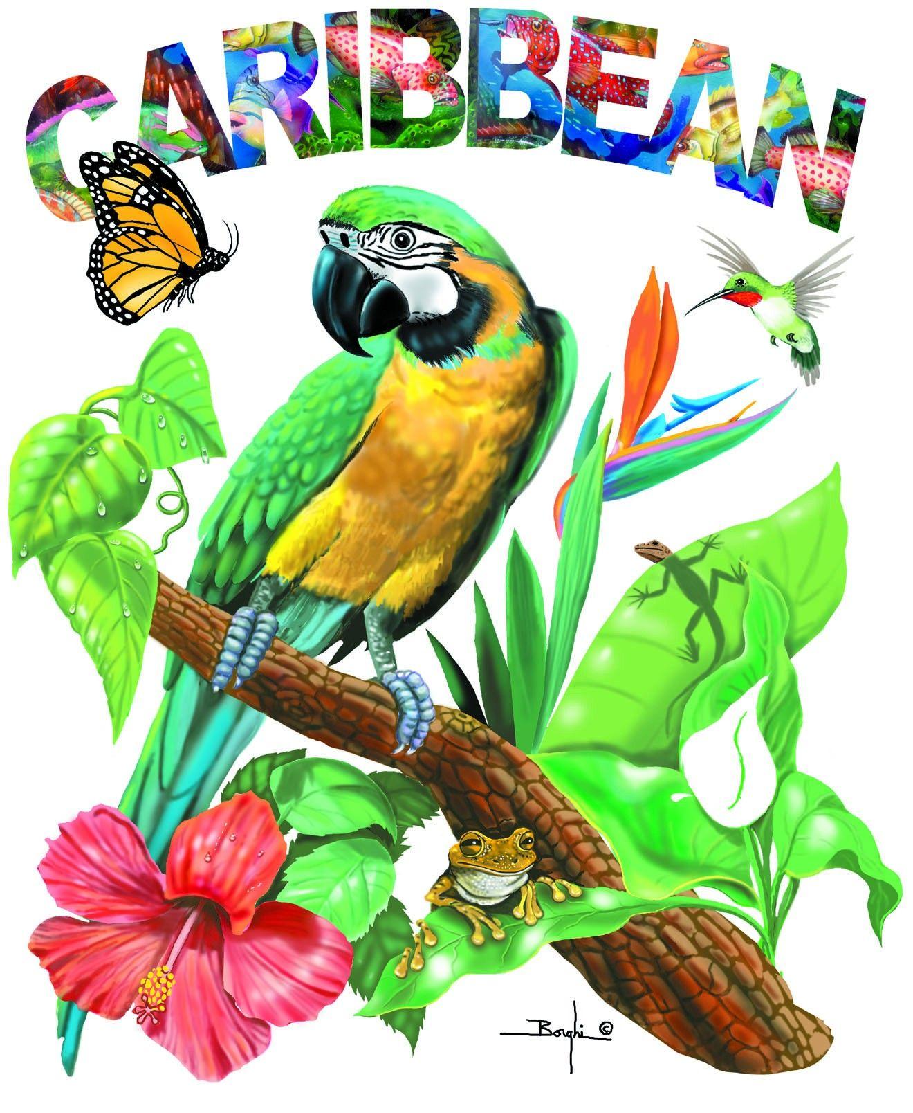 Caribbean carnival paradise pinterest destinations videos