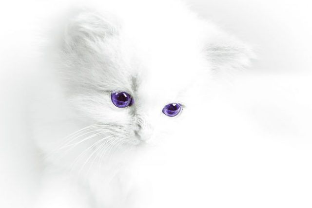 50 Shades Of Cuteness When God Made Cats Awesome Cute Cats And Kittens Kittens And Puppies Domestic Cat
