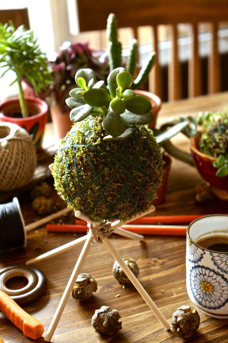 Pin de shaya lin en green pinterest jardiner a for Decoracion con plantas suculentas