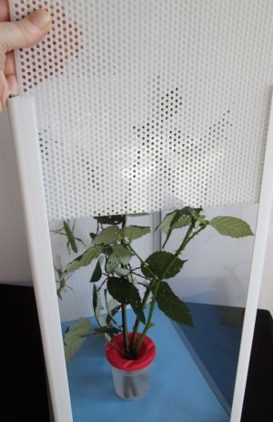 Small Life Supplies For Insect Cages Stick Insects Butterflies And Food Stick Insect Stick Bug Insects