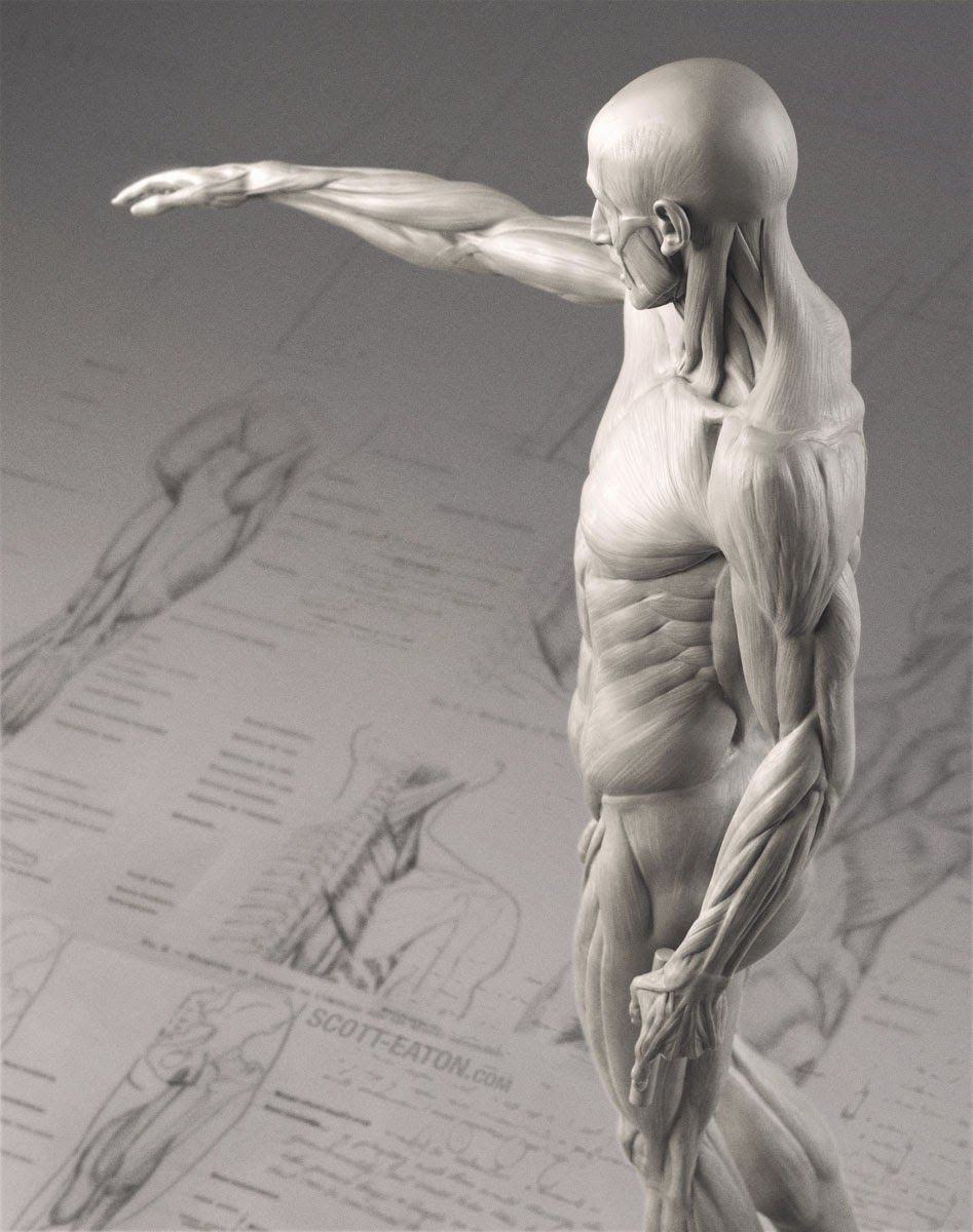 World Without Sleep: little anatomy ^^ | Reference Figure | Pinterest