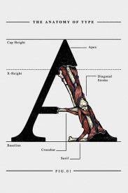 Estampa The Anatomy of Type