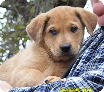 Sussex Nj Golden Retriever Catahoula Leopard Dog Mix Meet Zeus