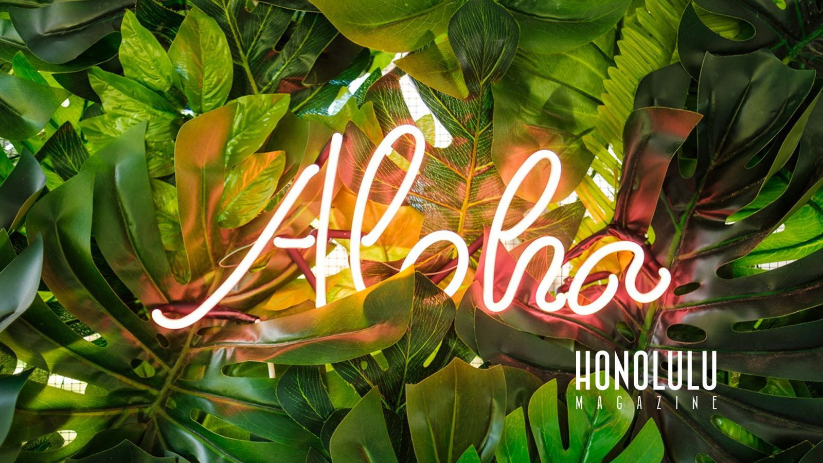 The Best Hawai I Zoom Backgrounds For Your Next Video Calls And Meetings Honolulu Hawaii Hawai