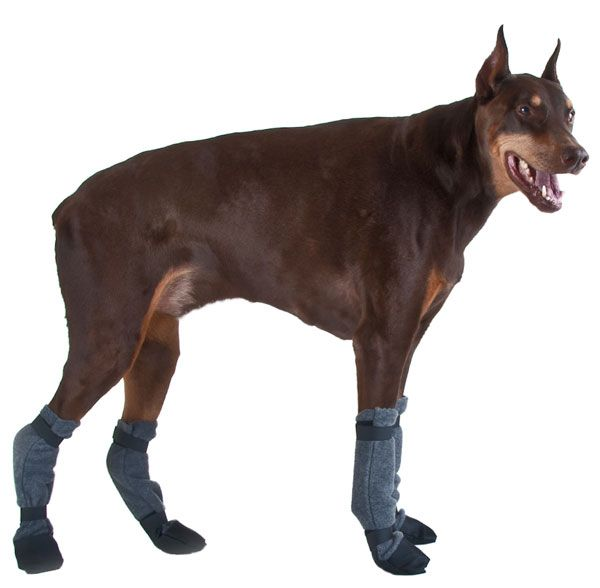 Doberman Pinscher Booties : Voyagers K9 Apparel, Greyhound clothing, dog clothing, dog clothes, dog winter coat, whippet clothing, Great Dane Clothing, dog collar, dog booties, hood, rain coat and dog leash by k9 apparel