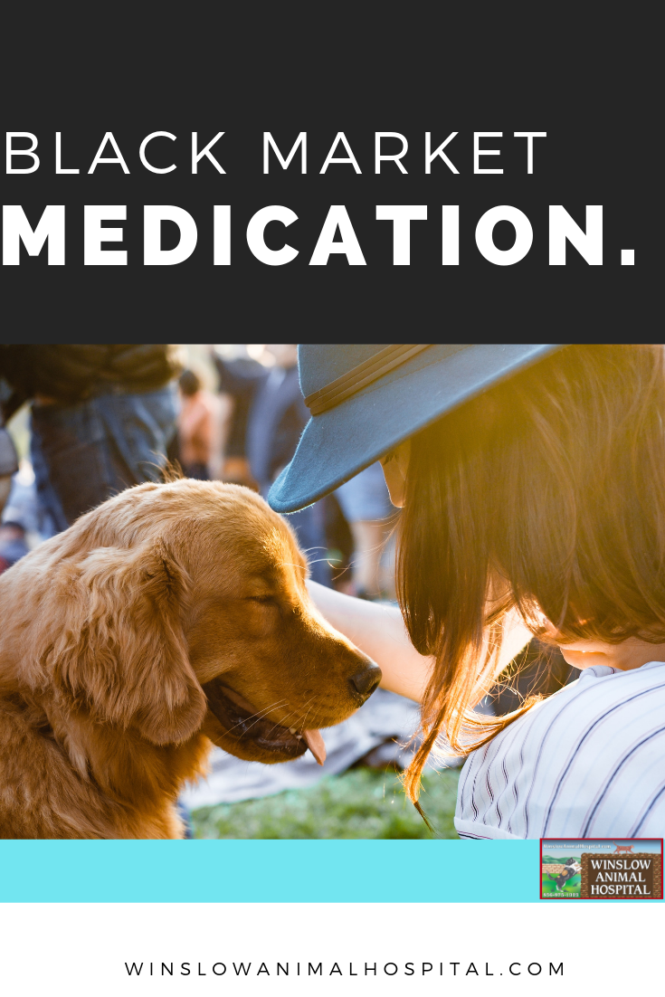 Learn How To Spot These Medications And Keep Your Pet Health Today With Winslow Animal Hospital Read It Today Pet Medications