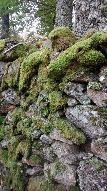 Muros de piedra fines de semana Pinterest Muro de piedra
