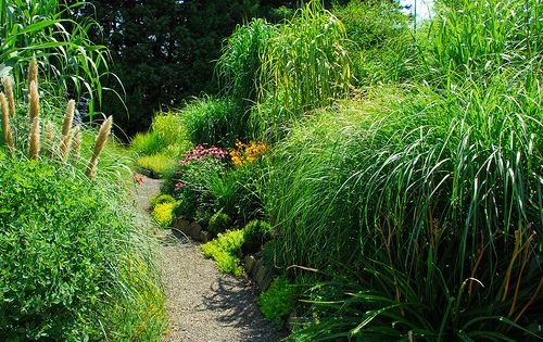 landscaping with grasses and shrubs landscape design using ornamental grasses and their