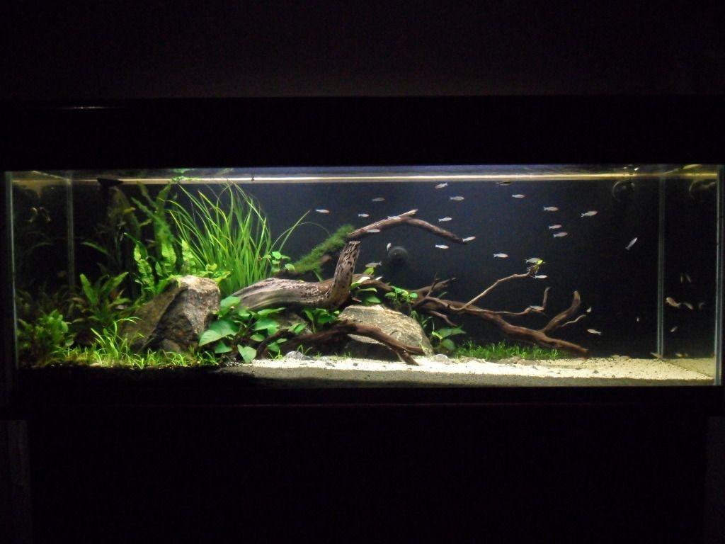 Delightful 21 Best Aquascaping Design Ideas To Decor Your Aquarium   Tips Inside