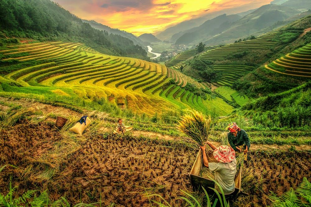 Mu Cang Chai travel guide. Most majestic terraces of