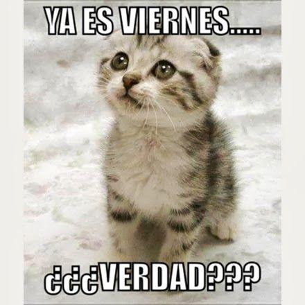 Ya es Viernes... ¿Verdad? #gaticos
