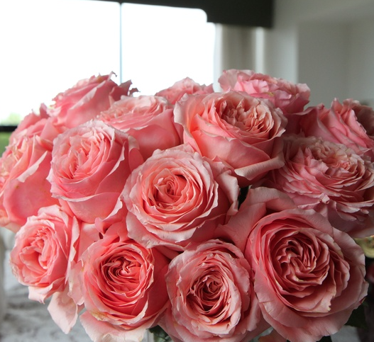 Pink Campanella Garden Roses All Year Amazing Flowers Peach Flowers Pink Roses