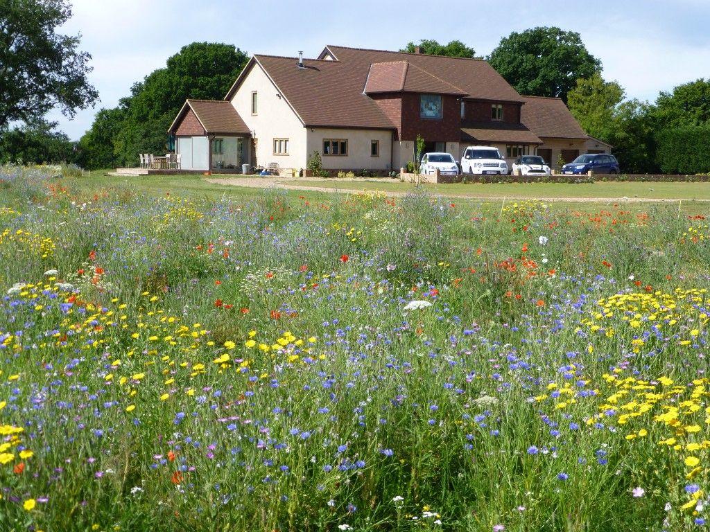 Wild flowers can bring a garden to life jardin Pinterest