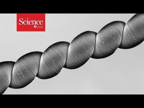 「carbon nanotubes、発電デバイス」の画像検索結果