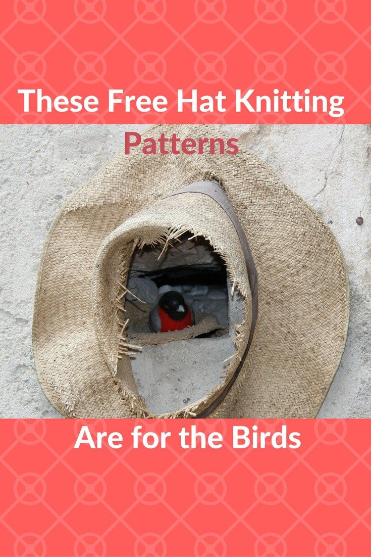 These 14 Free Hat Knitting Patterns Are For The Birds In The Best Way Hat Knitting Patterns Free Hat Knitting Patterns Knitting Patterns