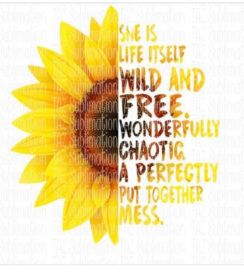 Pin by Melanie Messmer on Sunflowerz | Sunflower quotes ...