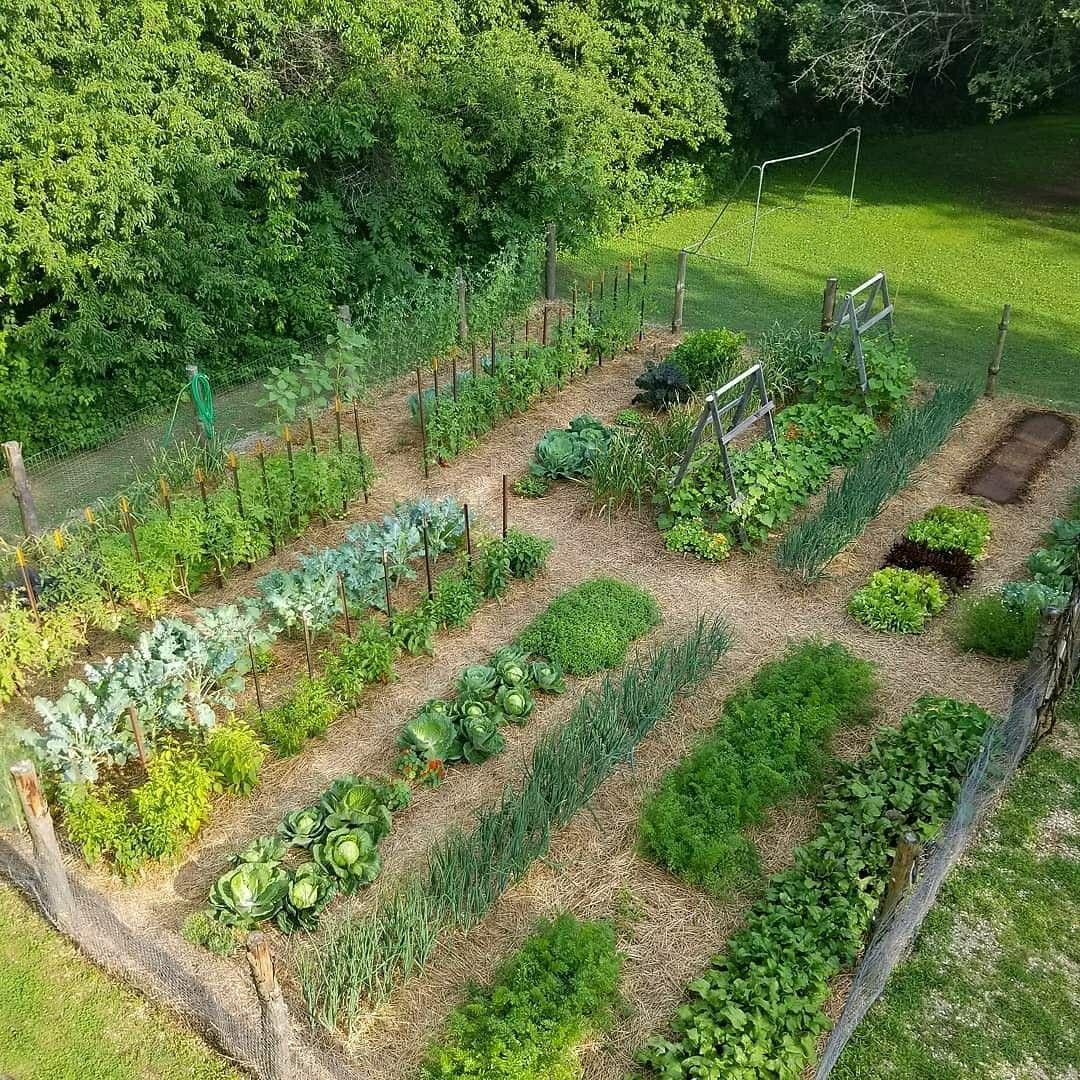 Pin By Exuan Chew On Countryside Life Vegetable Garden Design Garden Layout Vegetable Home Vegetable Garden