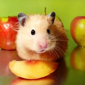 12 Things No One Ever Tells You About Babies Small Pets Hamster Pet Care