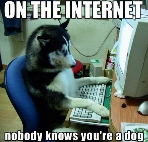 on the internet...