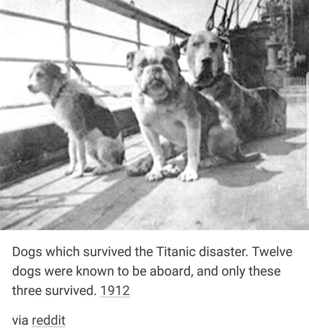 H M S Titanic Survivors Only 3 Of 12 Dogs Survived Titanic Deaths Titanic History Titanic