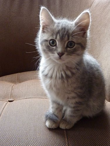 Just Something About This Kitten That I Love Kittens
