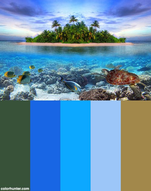 Tropical Color Palette marine+life+at+tropical+island+of+maldives