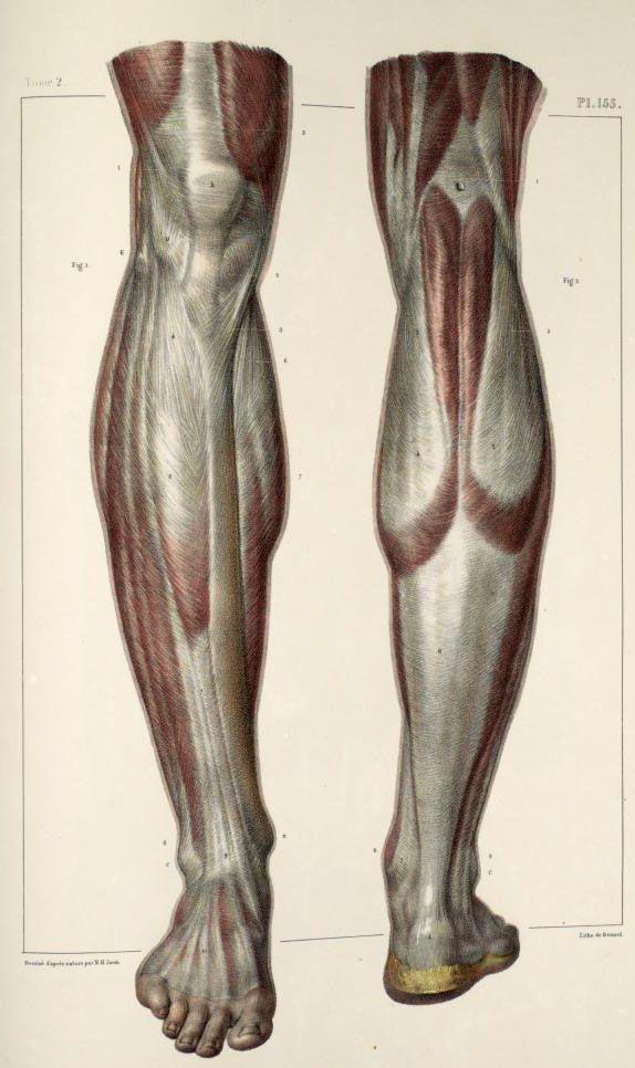 Inspirational Artworks: ANATOMY IMAGES | Anatomia y movimiento ...